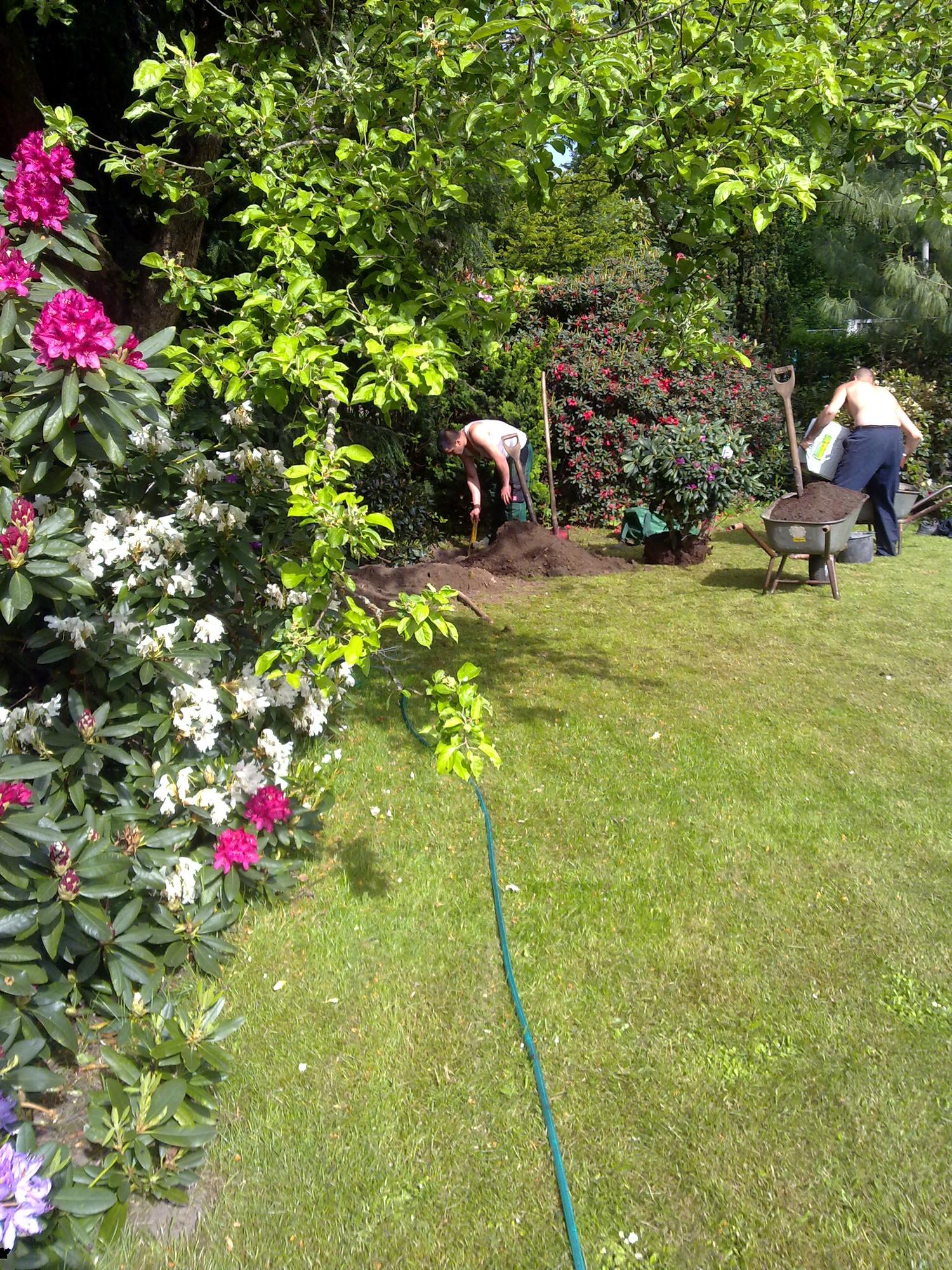 Neubepflanzung, Dauerpflege Ihres Gartens, Rasenmähen, Vertikutieren
