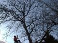 Hecke schneiden, Gehölz schnitte, Baumfalle, Baumpflegen