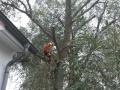 Baumpflege, kronen pflege, Baumfällung